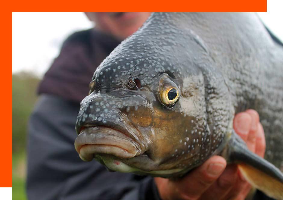 Coarse Fishing Trimpley